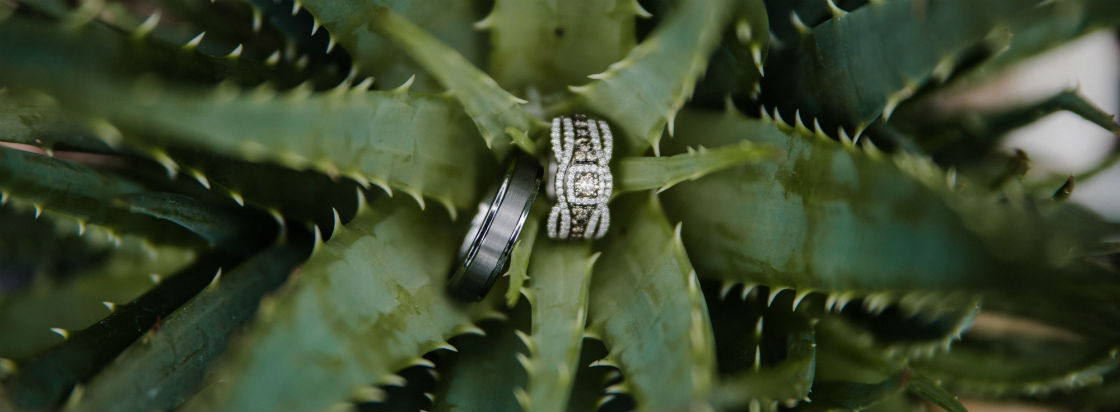 how much should an engagement ring cost rings sitting on succulent