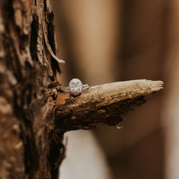 oval halo engagement ring sitting on a branch