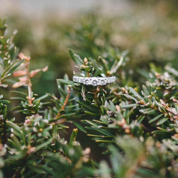 past present future ring on pine branch
