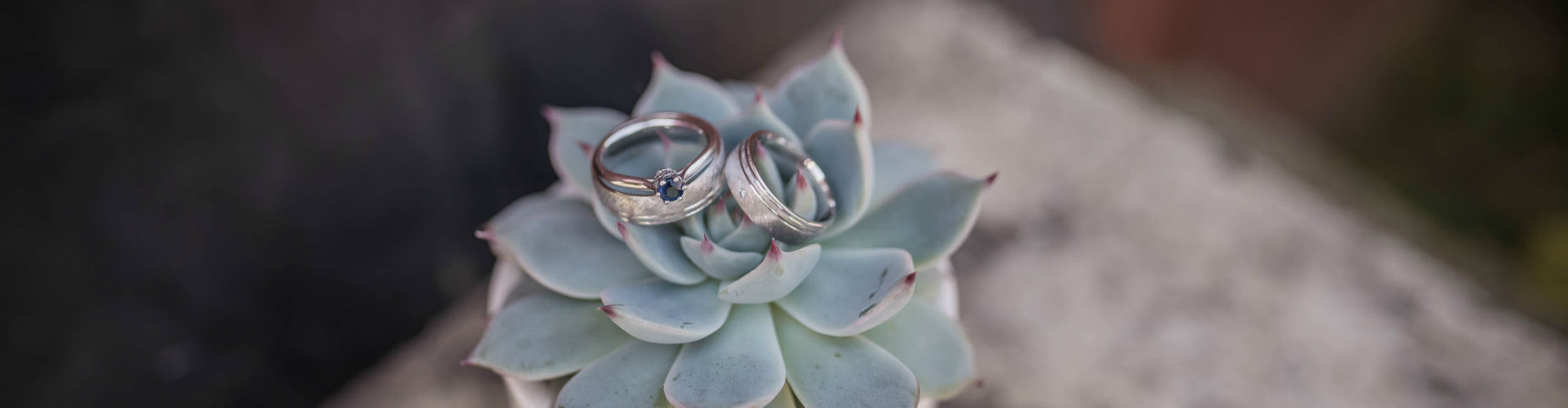 saimple sapphire ring on succulent plant