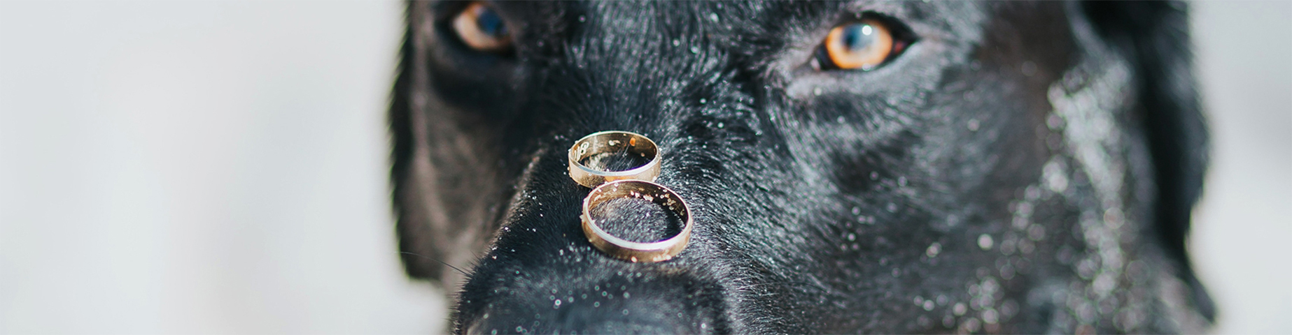 Dog with Rings