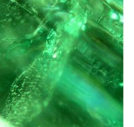 spiral inclusions in an emerald